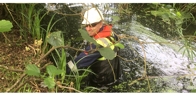 Water vole survey in the SSSI
